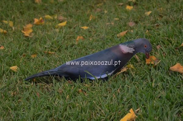 FOTO 6 a